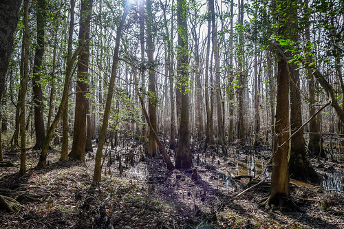 Congaree Swamp with Lowcountry Unfiltered-69