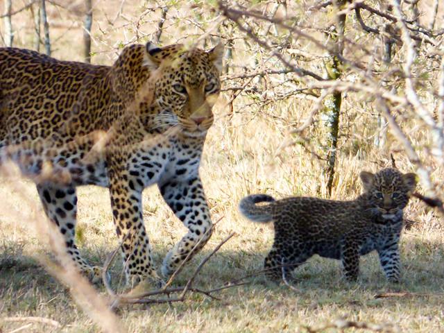 Jordan and Marisa safari 939.jpg