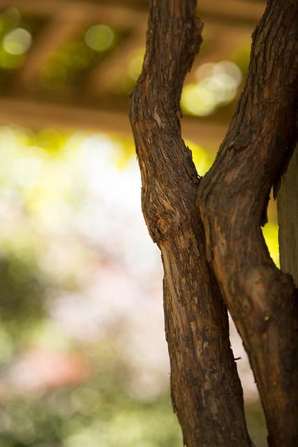 Garden - Rubbing Elbows