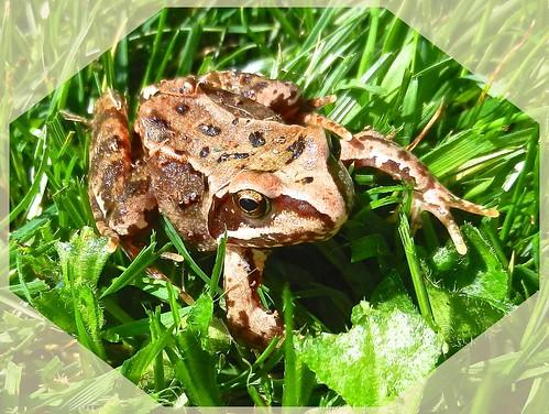 Young Frog DSCN4770