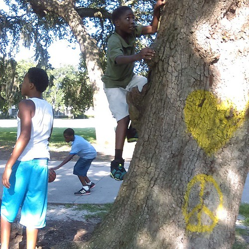 Kid climbing a tree before the SOS Forests event.
