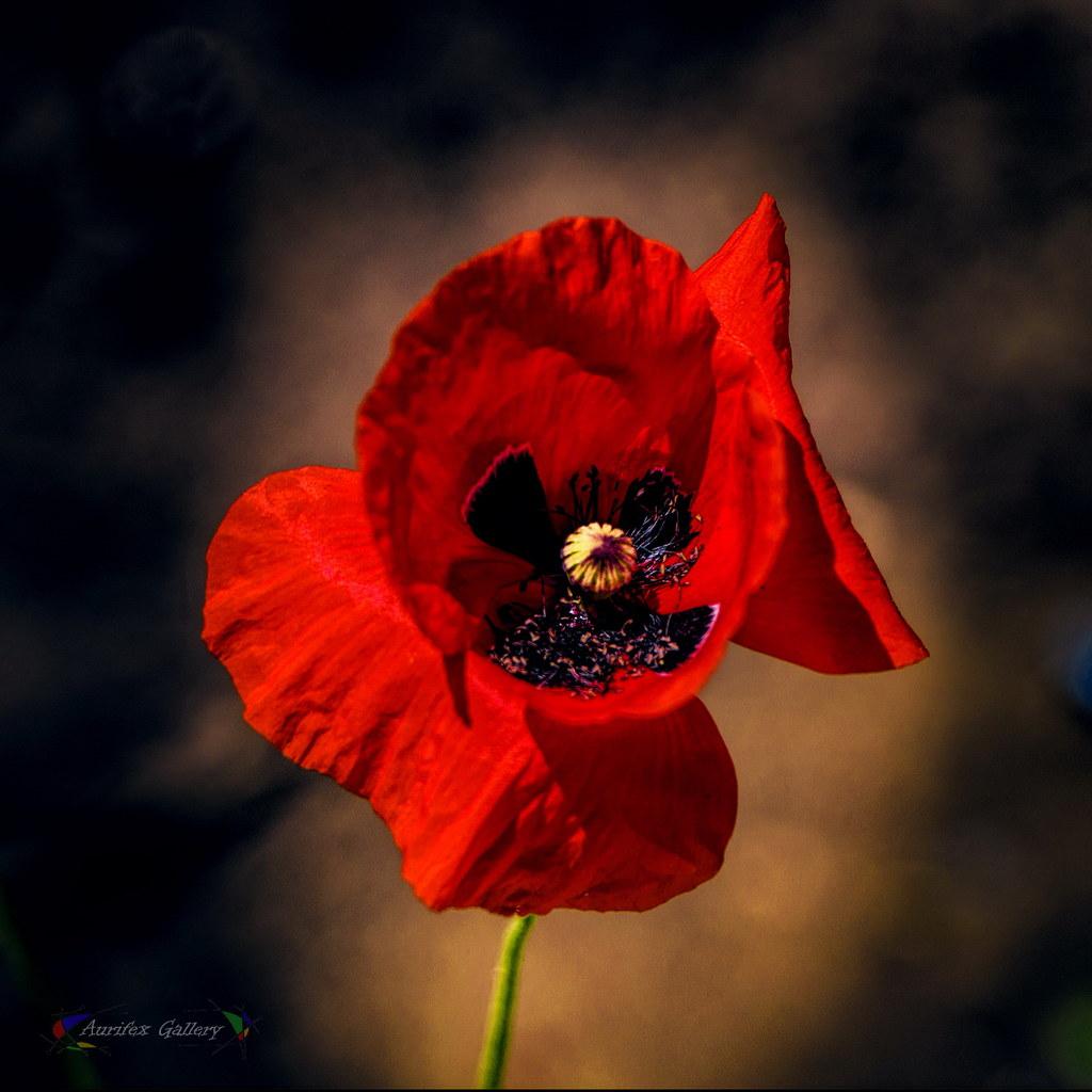 End flowering