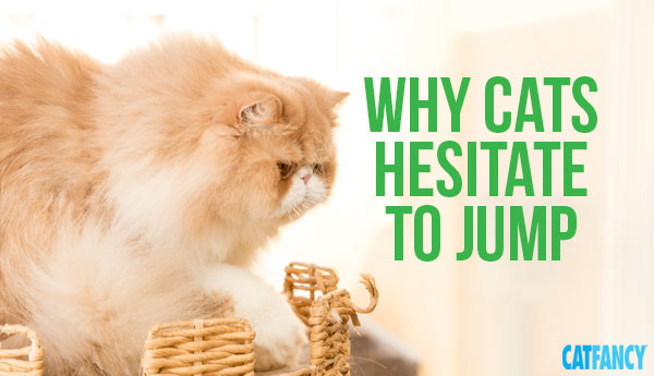 cats-hesitate-to-jump
