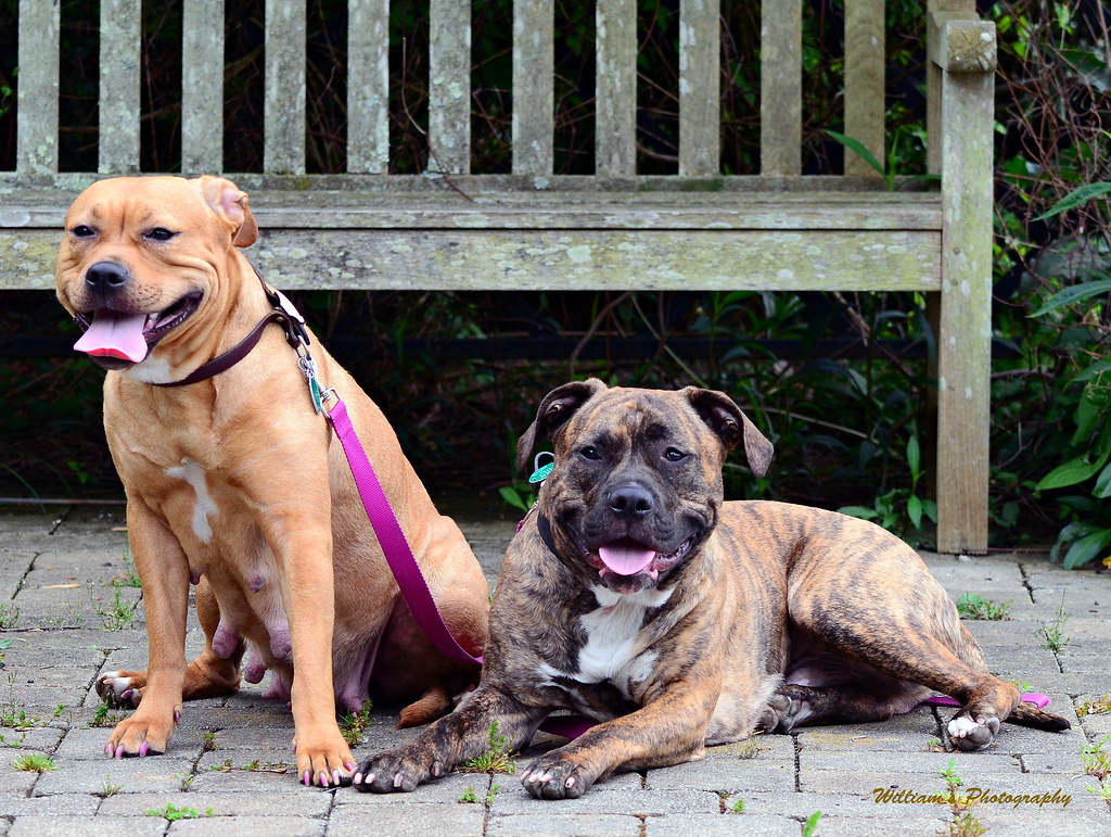 Free Dogs Dayton Ohio