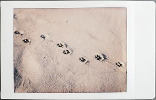 dog's feet
