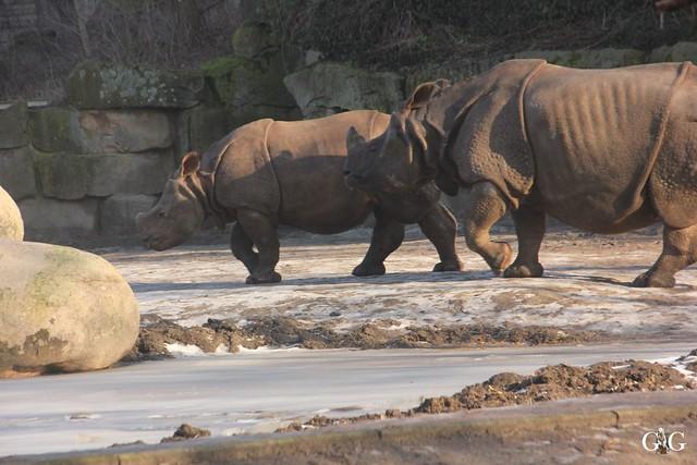 Tierpark Friedrichsfelde 22.01.201745