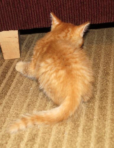 blogpaws-kittensC01662