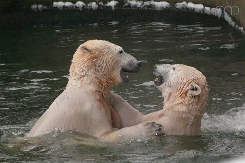 Knut & Tosca
