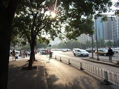 Sun, trees, traffic