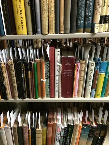 SCA Shelves