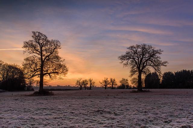 Edge of the farm at dawn