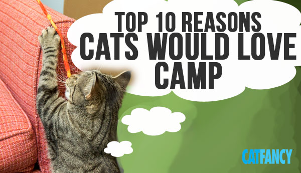 why-cats-love-camp