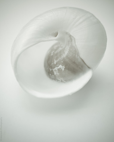 Shell // 10 06 15
