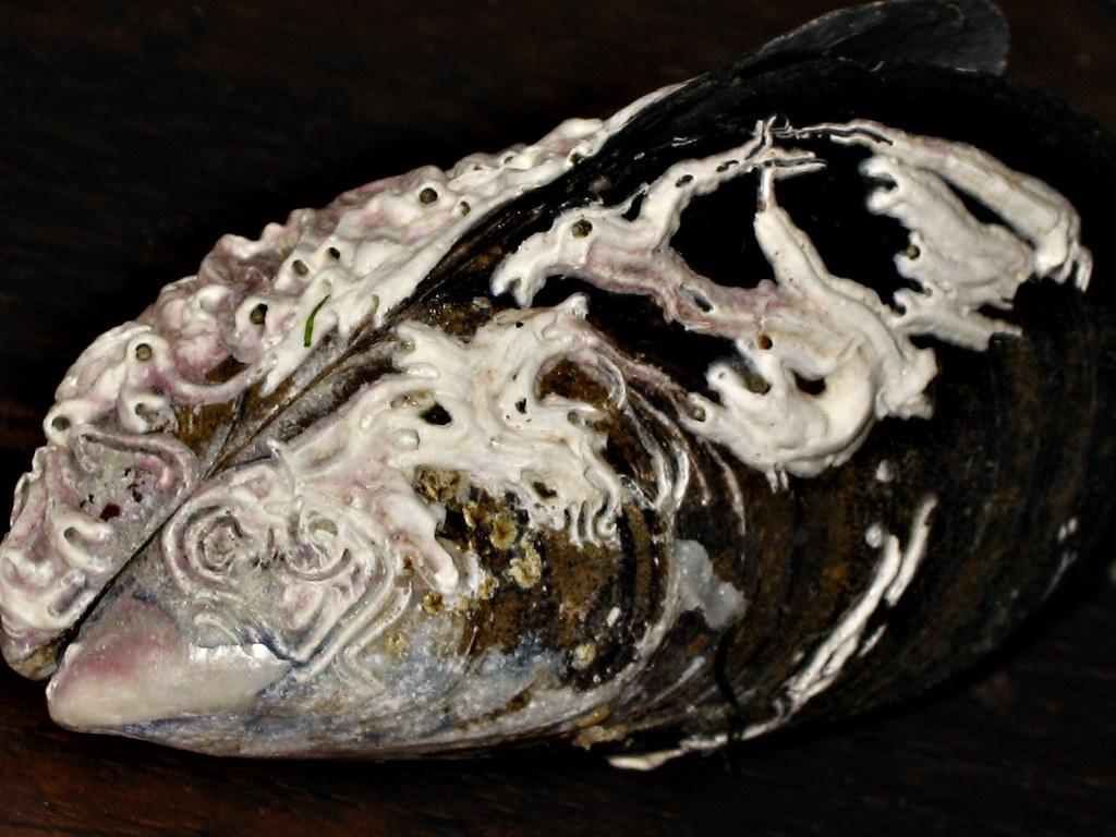 Mussel Shell Art