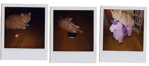 Party Animal Cat Food Phosphorus