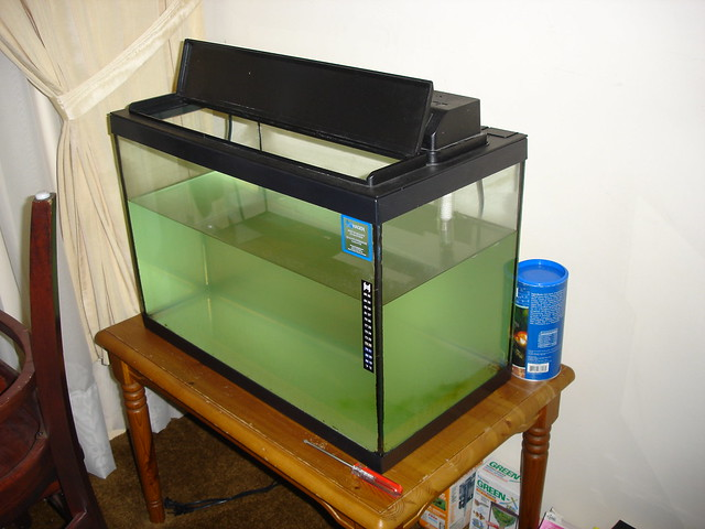 20 gallon fish tank flickr photo sharing for Fish tank camera