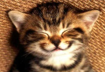 Cat Smiling Pictures, Images & Photos | Photobucket