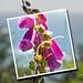 Snapshot of Oregon Wildflowers on the Coast