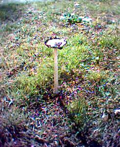 Seta de jard n 1 el jard n del recuerdo es un apartado for Jardin de setas