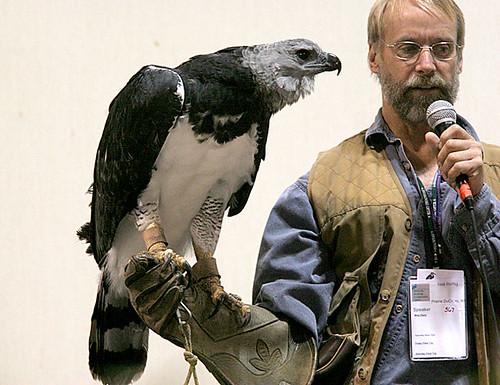 Harpy Eagle Harpia Harpyja Harpy Eagle With Neil