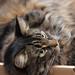 Puddle Cat