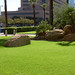 For My Friends in the Midwest:  GREEN in Phoenix!
