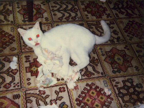 Evil Red Eyed Cat Tearing Up A Kitchen Roll And