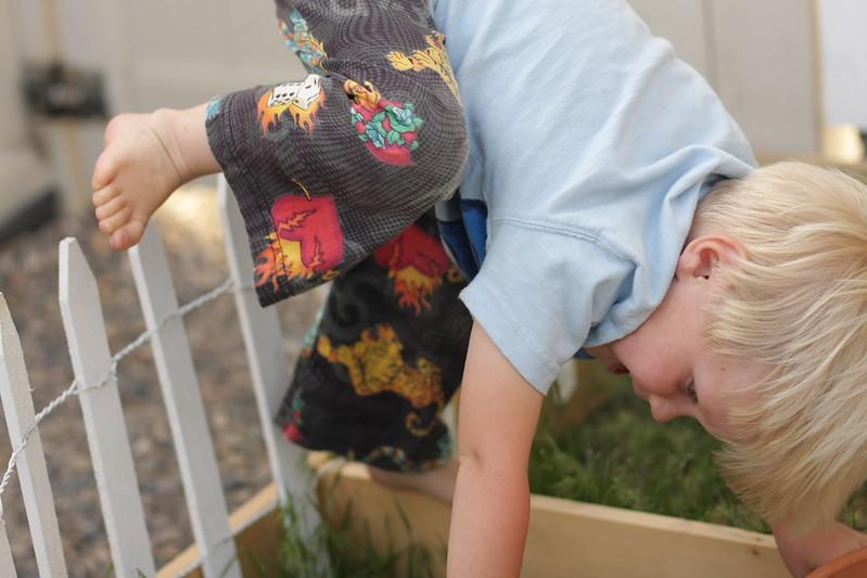 garden fence climber