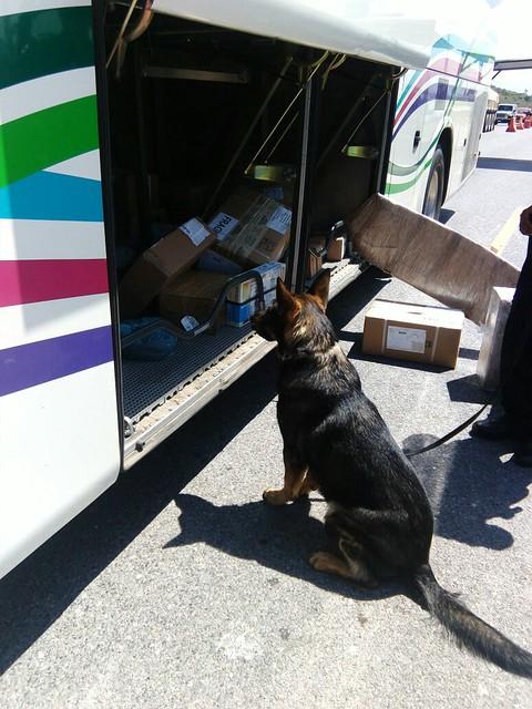 Policía Federal detecta cocaína liquida en autobús en la carrereta 57