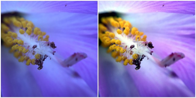 Before and After with PicTapGo - Macro Flower