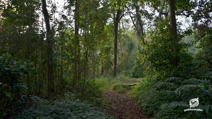 ป่าอุทยานฯ เฉลิมรัตนโกสินทร์