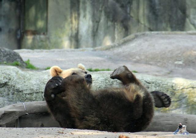 Tierpark Hagenbeck Dschungelnacht 06.05.2015   52