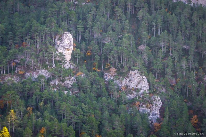 Bosque de Pinus nigra