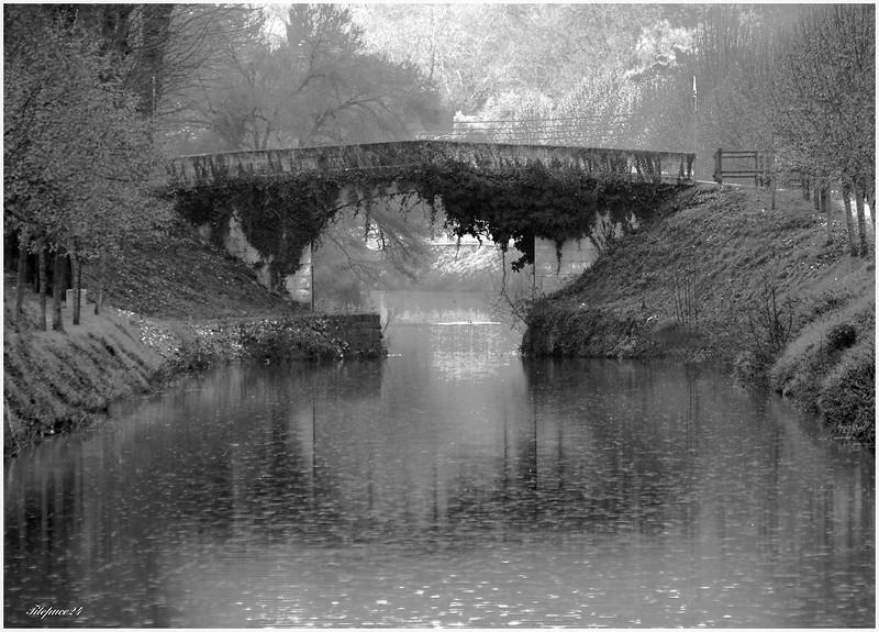 Le vieux pont de lierre sous la puie 32168359236_c2be346480_c