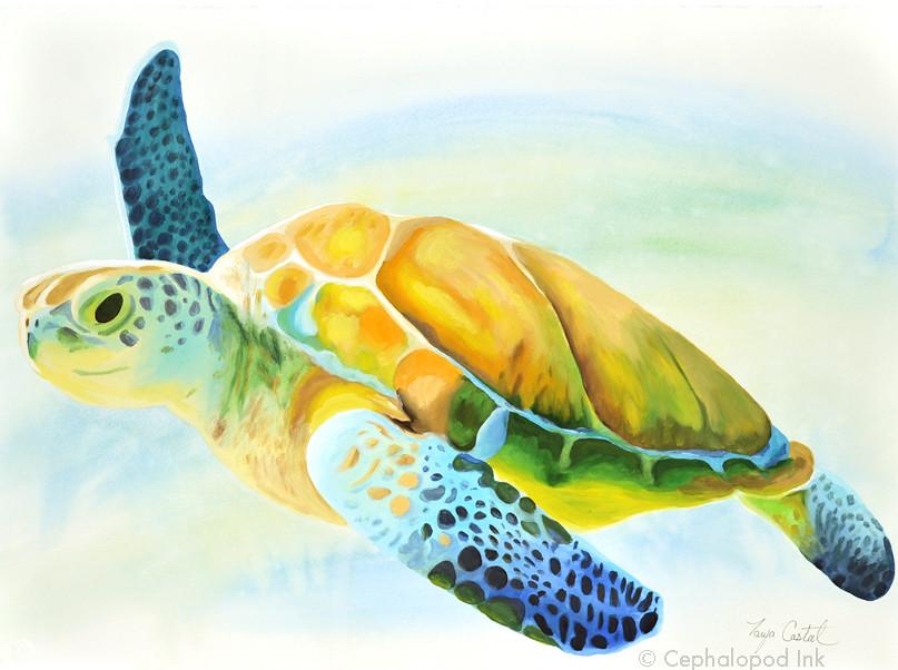 sea turtle painting by Tanya Casteel | Tanya Casteel (Cephalopod ink ...
