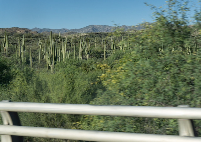 Saguaro Cactus from moving car 1