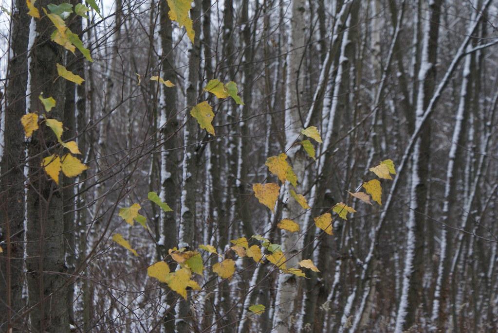 Dans un parc de Cracovie, loin de la ville et sous la neige.