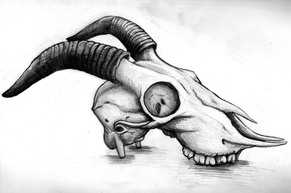 jacobs sheep skull pencil sketch   2016, graphite on sketch …   Flickr