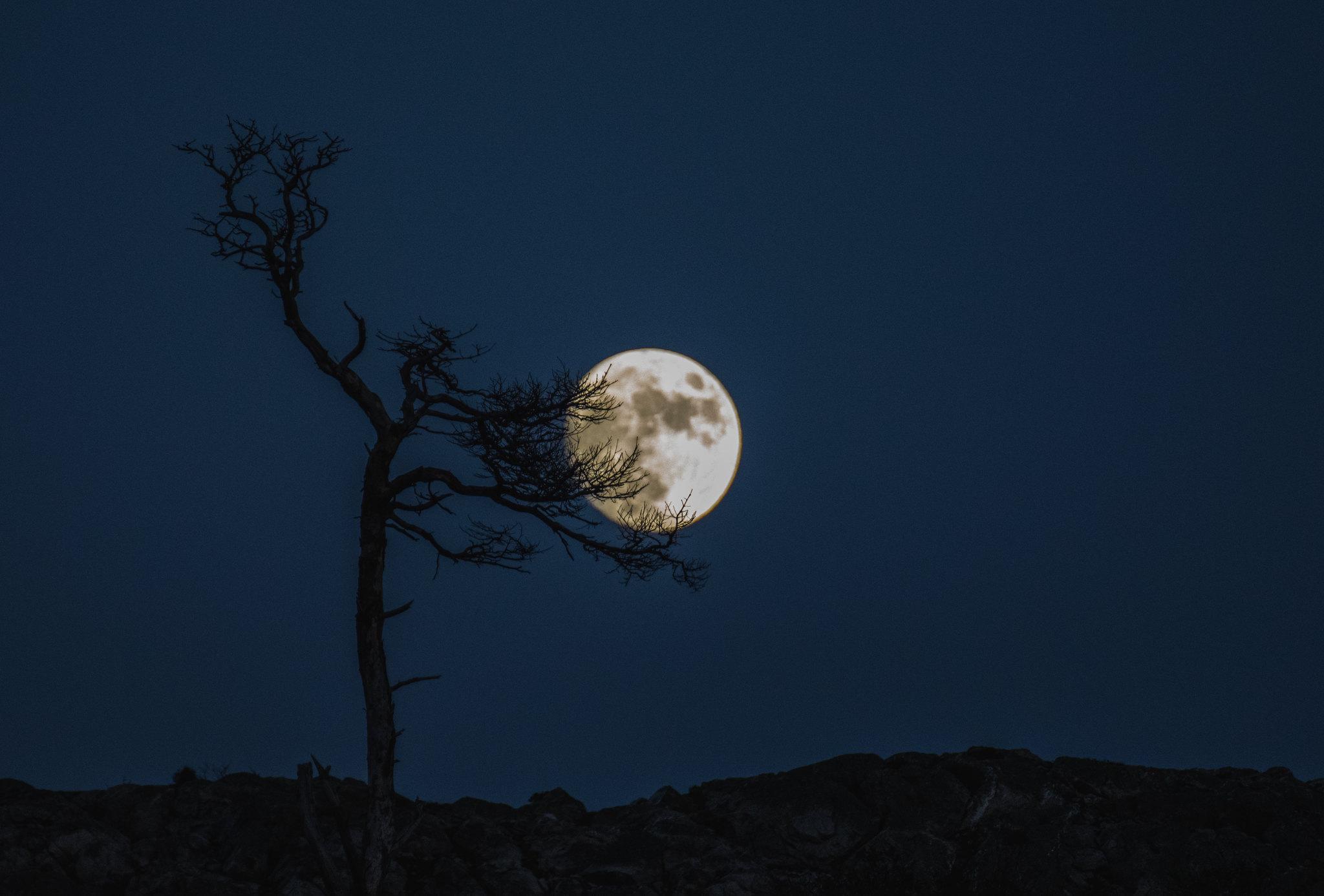 Moon Nestling
