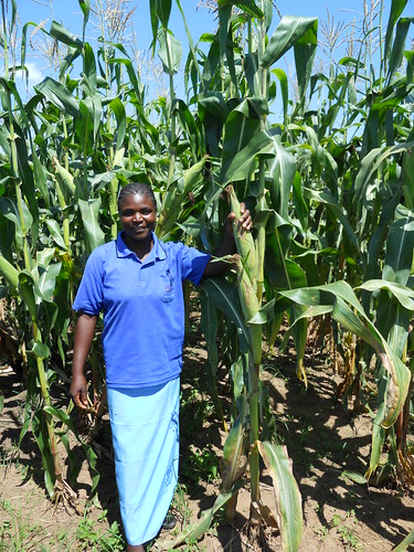 Gertrude Banda proudly shows her maize crop planted under conservation agriculture.Photo credit:Christian Thierfelder/CIMMYT