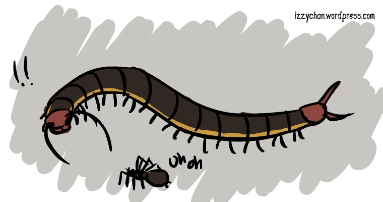 centipede attacking spider