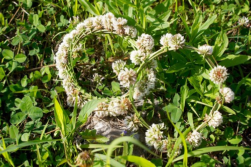 花冠の作り方
