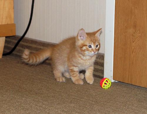 blogpaws-kittensC01651
