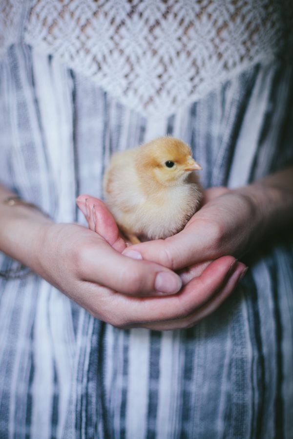 My Chickens | Daphne 1 week old by Eva Kosmas Flores of Adventures in Cooking