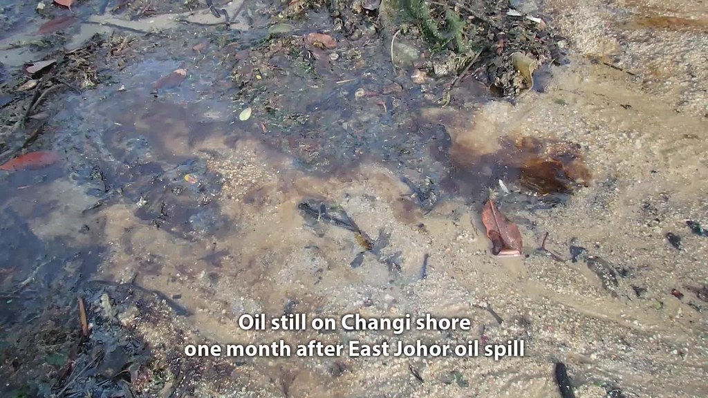 Oil and sheen still on the shore at Changi