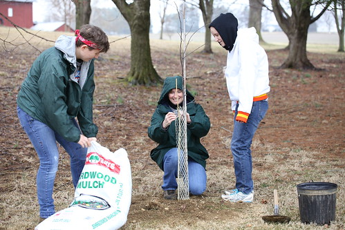 Photo of volunteers planting trees