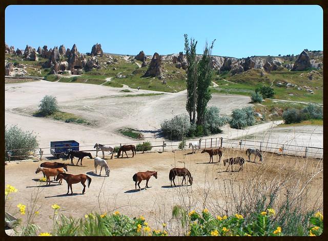 Horse ranch, Goreme