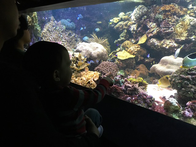 Visiting The National Aquarium With Kids