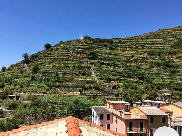 Terraced vineyards. 5 Terre - Manarola.