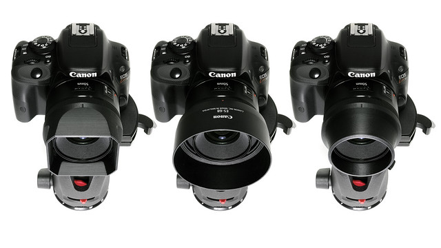 20150611_02_CANON EF50mm F1.8 STM + DIY Hood
